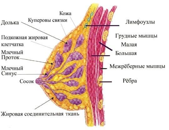 Изза чего пульсирует вена ниже грудм