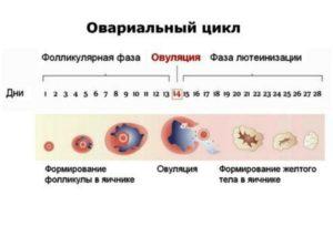 Процедура стимуляции овуляции при поликистозе яичников