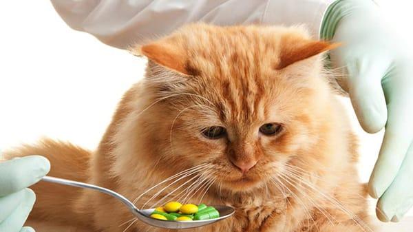 Поликистоз почек у кошек симптомы лечение и профилактика